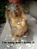 Happy Squirrel