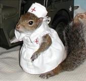 nurse squirrel