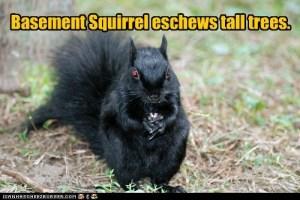 basement squirrel