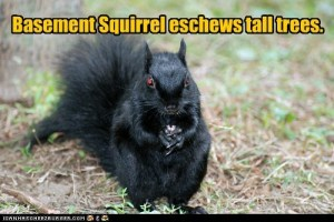 basement squirrel