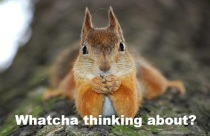 squirrel-thinking