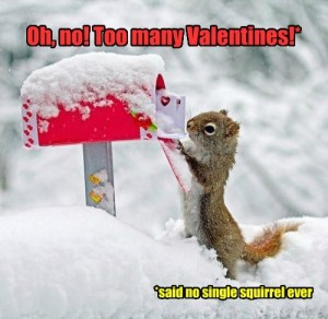 v-day squirrel