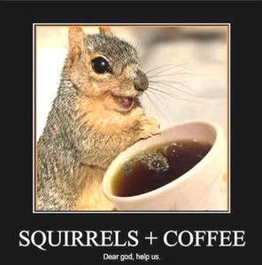 SquirrelsOnCaffeine.510468